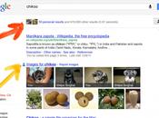 Google pone busquedas para promover social