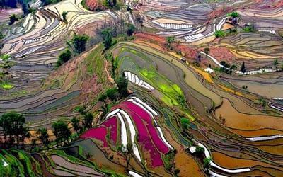 Campos de arroz en Yunnan, China