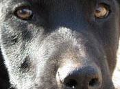 Black, cachorrón adopción (Murcia)