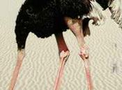 """síndrome avestruz"""
