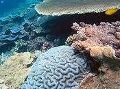 ecosistemas marítimos están peligro emisiones carbono