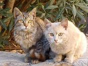 URGENTE, gatitos peligro envenenados (MURCIA)