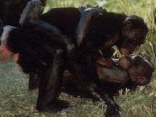 Aprendiendo bonobos...
