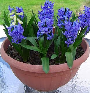 Flores plantas y jardines para san valent n paperblog for Plantas ornamentales con flores