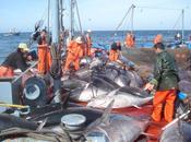 pesca global