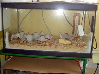 Sistema de calefacci n para acuario calentador for Calentador acuario