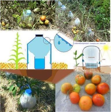 Goteo solar. Agua de mar y botellas de plástico para regar tu huerto por Basurillas