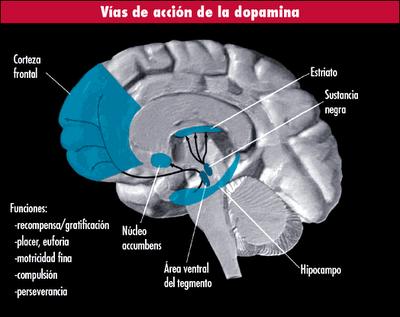 Que es la Adicción? Adiccion-cuestiones-psicofisiologicas-L-HwtN1_