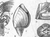 importancia taxonomía, ejemplo