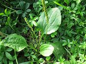 Remedios caseros para base plantas