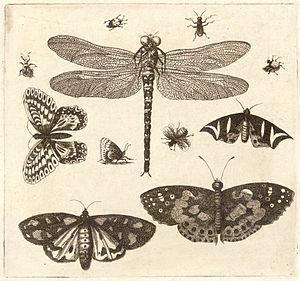 Wenceslas Hollar - A dragonfly, ladybirds, and...