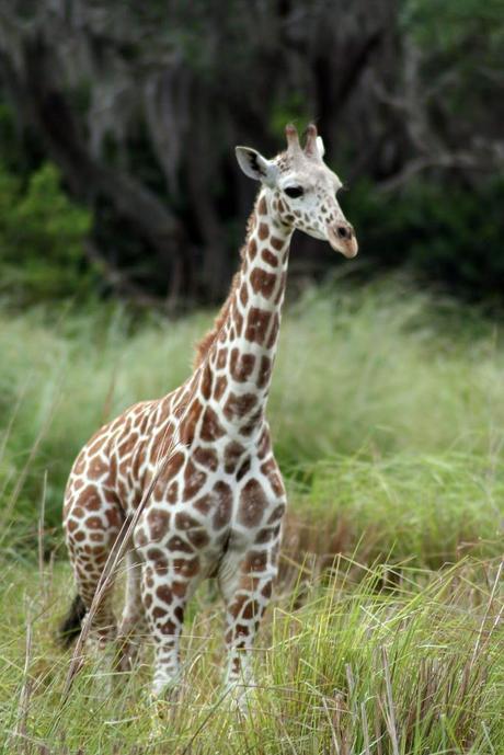 Elegir el mejor operador para tu safari en África