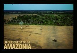 Amazonia, selva virgen o agricultura extensiva