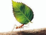 Imita a la hormiga en su perseverancia