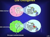 oncogén implicación cáncer