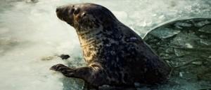 El Zoo de Varsovia lucha contra el frío, el hielo y el aburrimiento invernal
