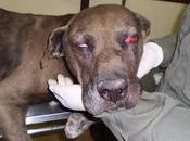 Rota, perro apaleado, desnutrido maltratado ¡urgente! (Cadiz)