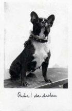 El origen del Bulldog Francés