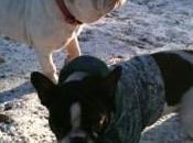 responsabilidad adoptar perro, Bull