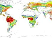 Mapa bosques Tierra