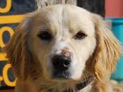 Koke cachorro macho meses. (almeria)