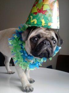 Pepa celebra con nosotros el hit 1000 de Mibulldog Francés