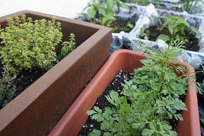 Huertas caseras con elementos reciclados paperblog - Jardineras caseras ...