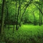 Bioeconomía en Europa:  una gestión razonada y razonable de los recursos naturales