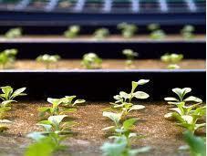futuro está supermercados ecológicos