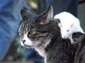 perro, gato ratón