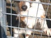 ¡¡urgenteeee!!! hembrita lleva desde pasado perrera: demasiado, debe salir ¡¡ayuda!!! acogida adopción. perrera cordoba.