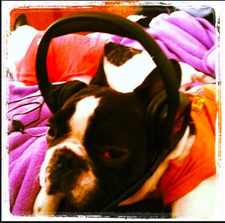 Mi Bulldog Francés DJ