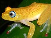 fauna Madagascar llegó isla subida troncos ramas