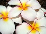 secreto belleza mujeres Tahitianas